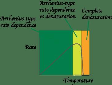 arrhenius-enzyme-rate-depen.png