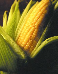 What's with Europe's Opposition to GMOs?