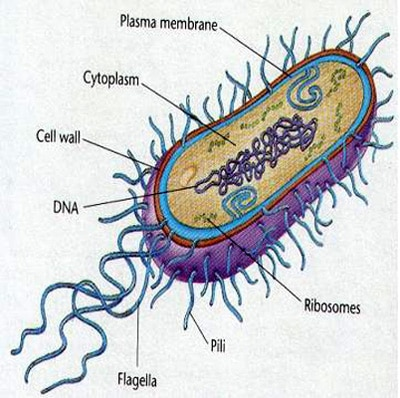 Thinking Microbes