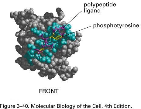 Protein Sociology: Collective Interaction Behaviors