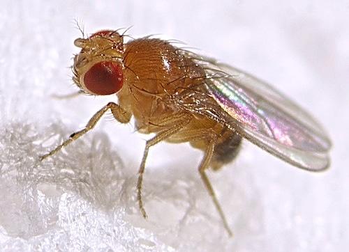 Model Organisms in Biomedical Research