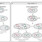 Tech Clinic #4: Can a single E.coli take up 2 plasmids?