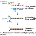 Get the qPCR Fluorescence Low Down with Plexor