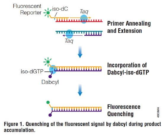 Get The Qpcr Fluorescence Low Down With Plexor Bitesize Bio
