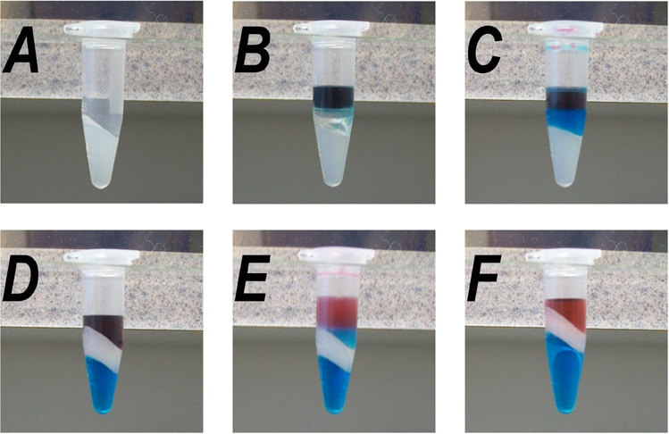 Practical application of Phenol/Chloroform extraction