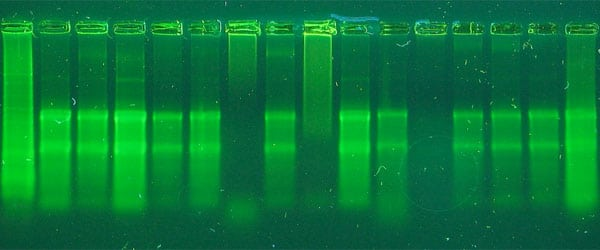 Troubleshooting RNA Isolation