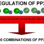 Basics of Protein Phosphorylation Part IV: Taking It Off