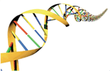 Human Genome Project – 10 years since the first draft