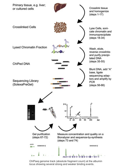 An Introduction To ChIP-seq