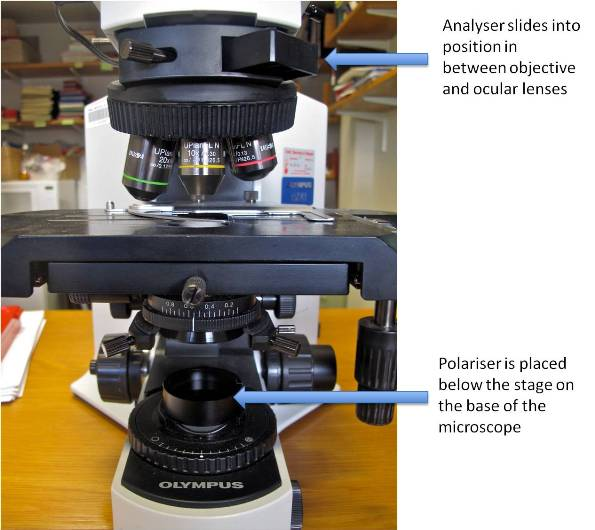 What You Ought To Know About Polarising Light Microscopy
