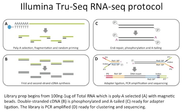 An Introduction to RNA-seq