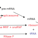 How to detect long non-coding RNA (lncRNA)