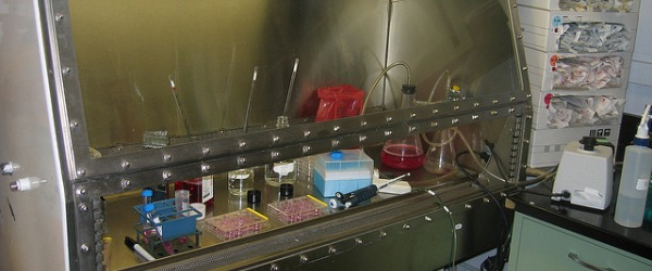 Seven Things That Really Annoy Me About Tissue Culture - Bitesize Bio