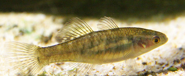How RNA-FISH Can Complement qPCR, and Vice Versa