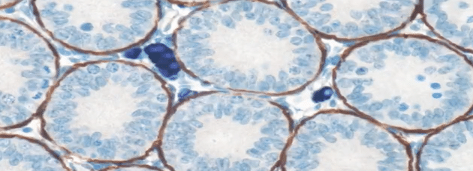basic_methods_for_immunohistochemistry