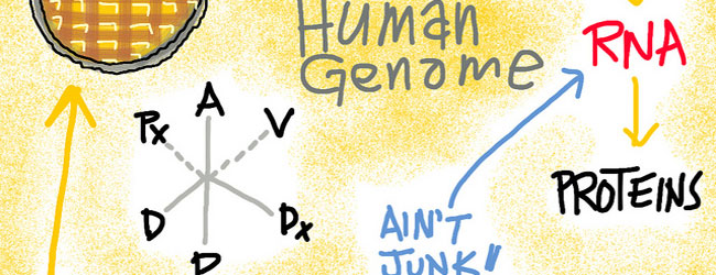 Don't Get Lost in RNA-seq Translation: RNA Sequencing the NGS Way