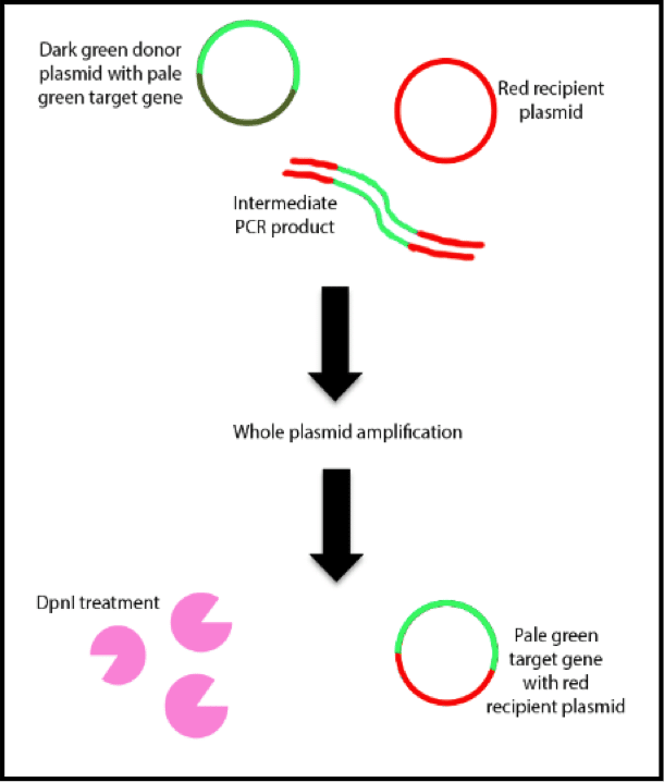Letting Go of Your Ligase: Transfer PCR