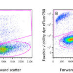 Viability Dyes for Flow Cytometry: It's Not Just a Matter of Life and Death