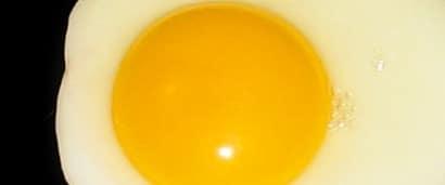 Vitamin H and Egg White: Streptavidin-Biotin for Immunohistochemistry