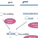 Mysterious miRNAs: An Introduction to MicroRNAs