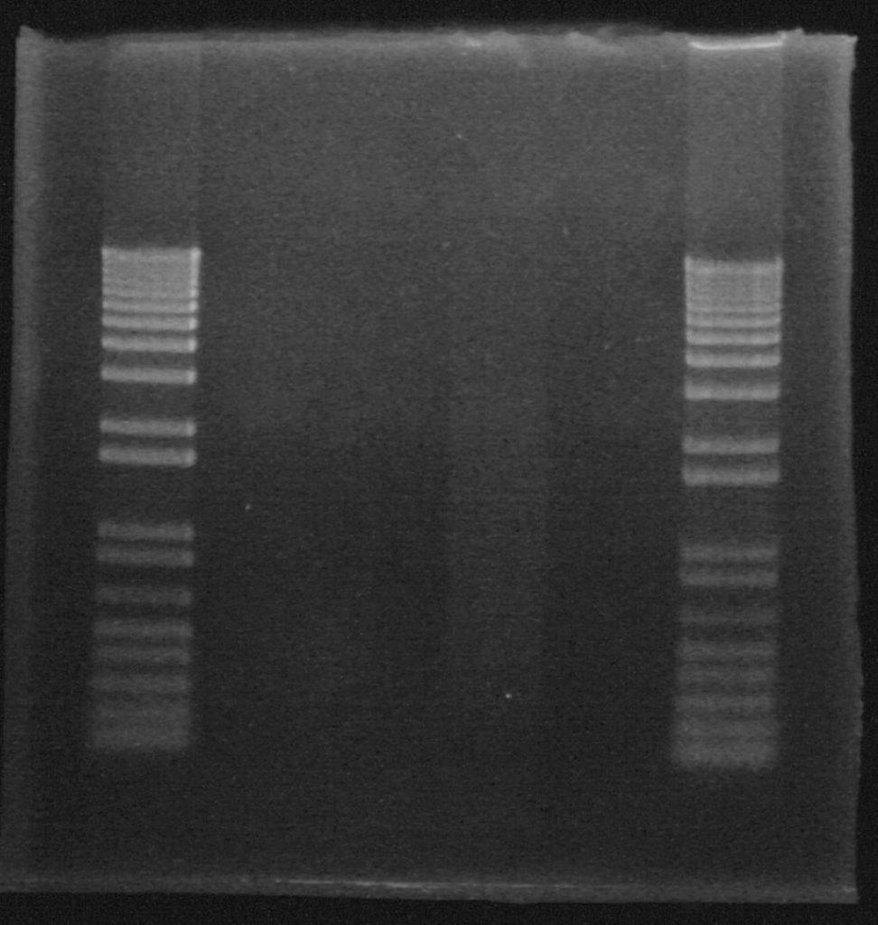 Faster, Even Cooler DNA Gels!