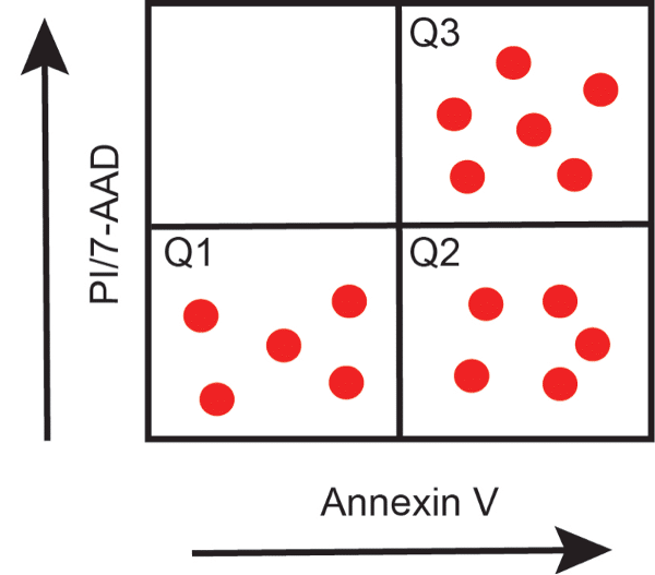 Locating Your Cellular Apoptosis Squad: Annexin V Staining Assays