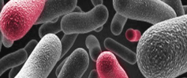 Basic Bacterial Culturing Practices - Bitesize Bio