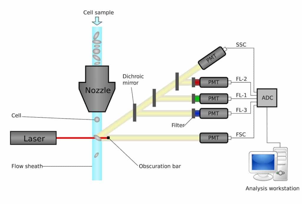 Hydrodynamic Focusing in Flow Cytometry
