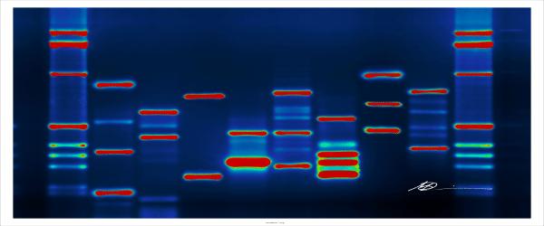 Cloning Large or Complex DNA Fragments - Bitesize Bio