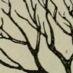 plyogenetic tree construction
