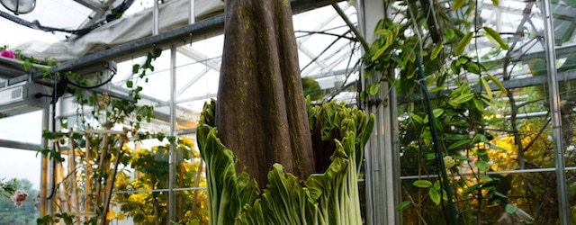 Earn That Green Thumb! An Introduction to Working in a Greenhouse