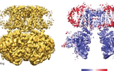 Harnessing the Power of Heterogeneity in Cryo-electron Microscopy