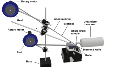 Mouse Whole-Brain Volume Electron Microscopy for Cellular Connectomics – Enabling Large-Scale SEM Projects with ZEISS MultiSEM