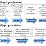 How to Choose Your Method for DNA Extraction from Whole Blood
