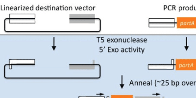 Understanding and Designing Flanking Homology DNA Assembly Experiments
