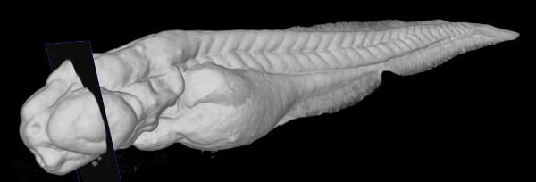 Biological Applications of X-Ray Microscopy and Correlative XRM - FIB-SEM Imaging