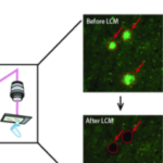 How to Conduct Localized Proteomics of Microscopic Regions