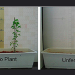 An Introduction to Fertilizers in Plant Research