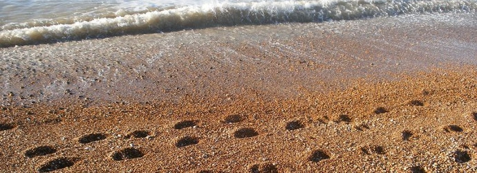 Image of footprints in sand by a beach