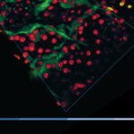 Your guide to Complete and Fast 3D Image Analysis in Microscopy