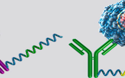 Image showing conjugated binding and not binding with RNA
