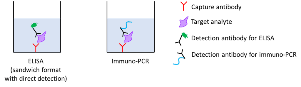 Immuno-PCR, immunodetection, PCR, ELISA, detection assay