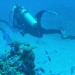 Image of divers swimming past a coral reef and fish