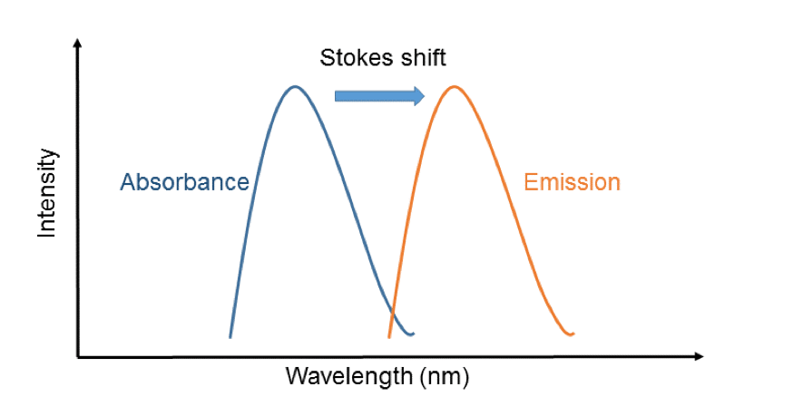 The Stokes Shift