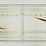 Couples Counseling for Zebrafish
