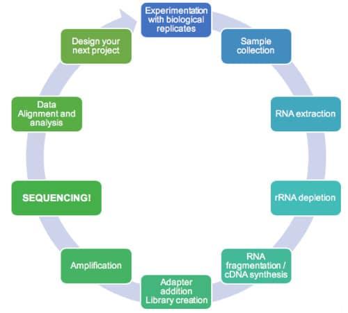 Battle of the Methods: Whole Transcriptome Versus mRNA-seq