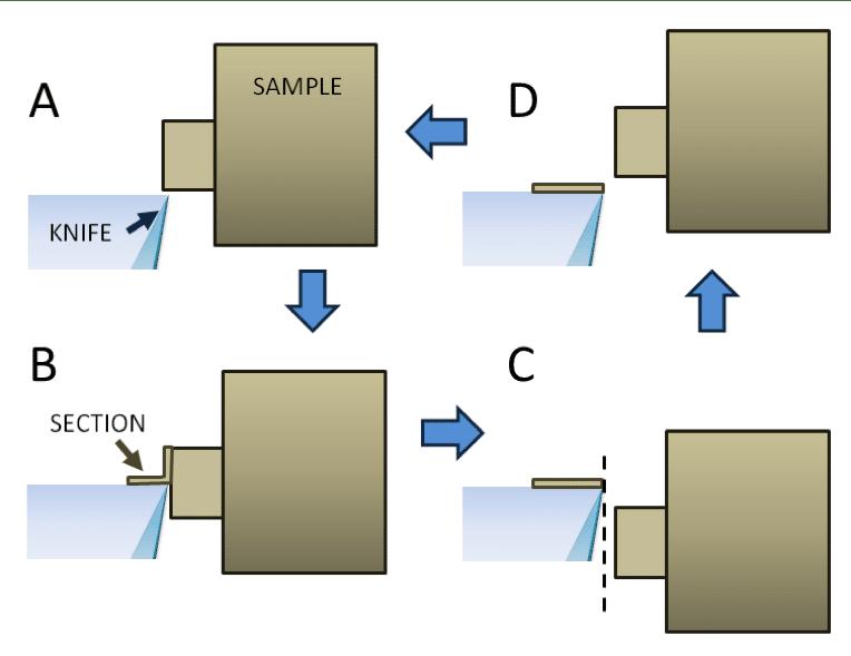 Ultramicrotomy for Electron Microscopy