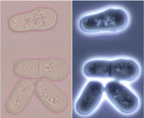 Emerging Model Microorganisms Take to the Stage