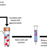 How to Set up Your Elution Experiment