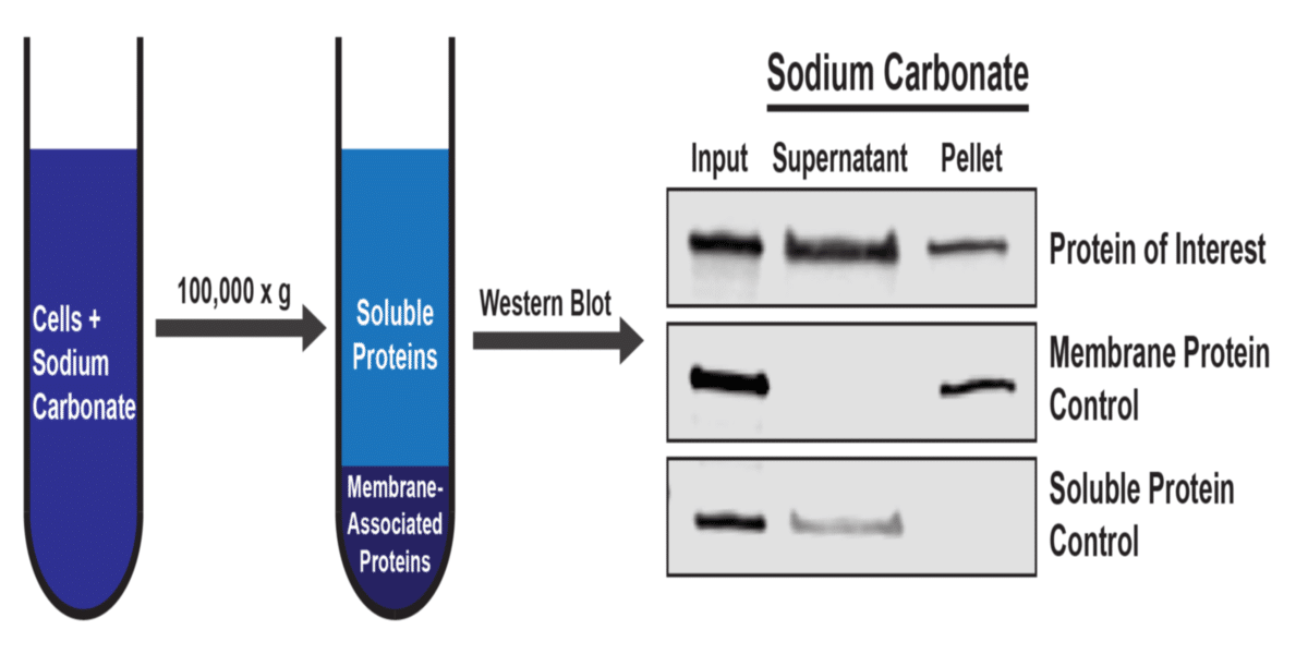 Fractionating Proteins by Solubility: or, How I Learned to Stop Worrying and Love the Ultracentrifuge